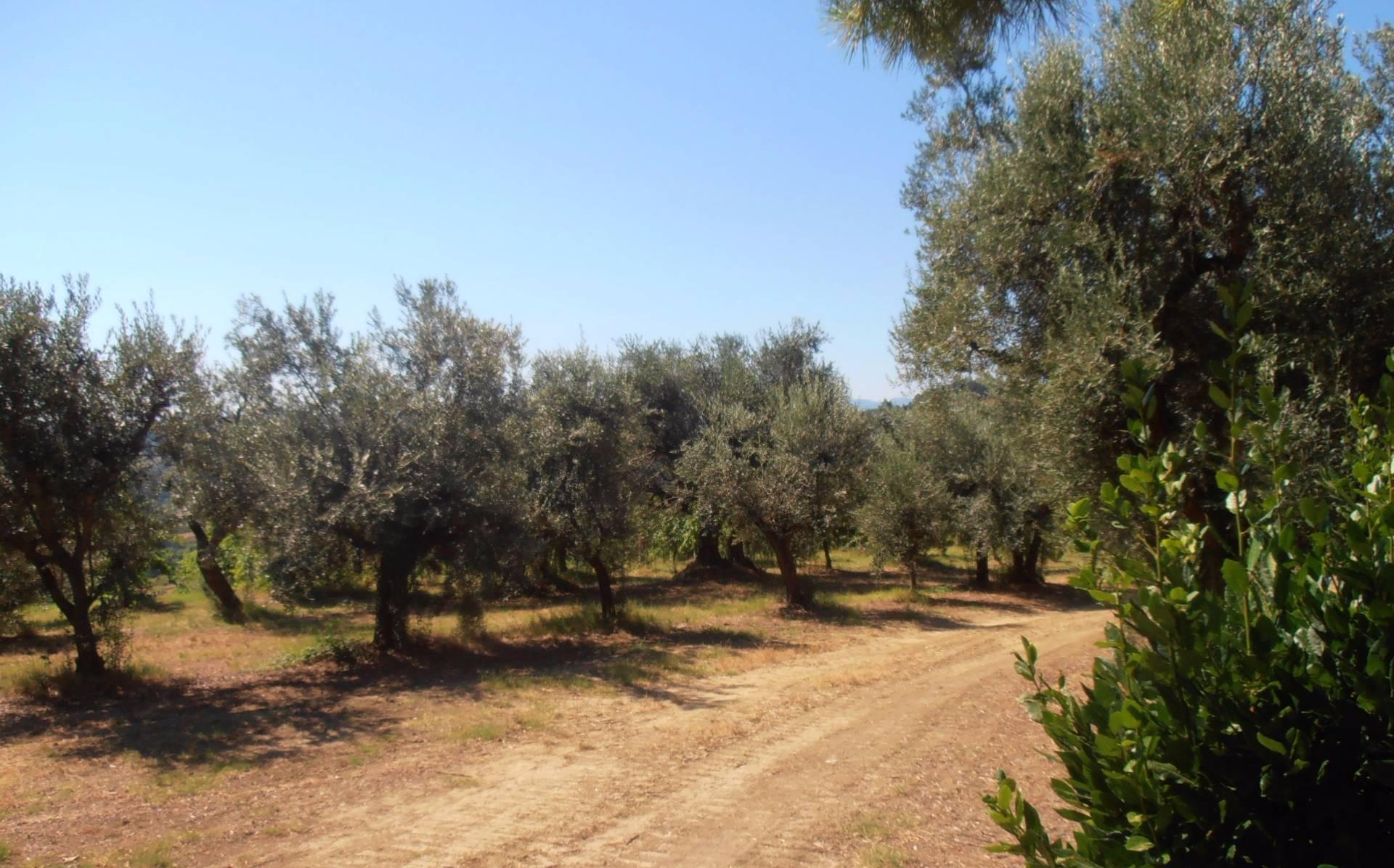 Terreno Agricolo in vendita a Montiano, 9999 locali, prezzo € 1.200.000 | CambioCasa.it
