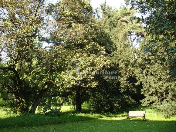 Villa in Vendita a Montebelluna: 5 locali, 1000 mq - Foto 6