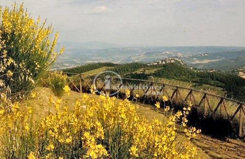 Azienda in Vendita a Allerona: 5 locali, 600000 mq