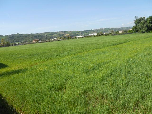 Terreno Edificabile Residenziale in vendita a Monteprandone, 9999 locali, zona Zona: Centobuchi, Trattative riservate | CambioCasa.it