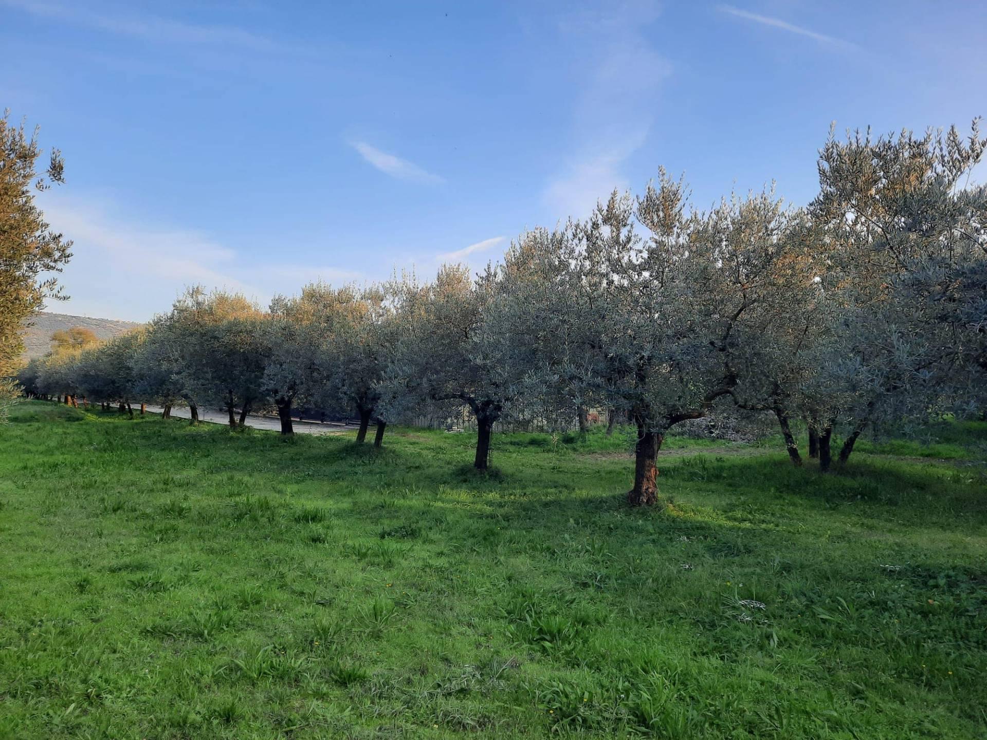 Terreno Agricolo in vendita a Alatri, 9999 locali, prezzo € 26.000 | CambioCasa.it