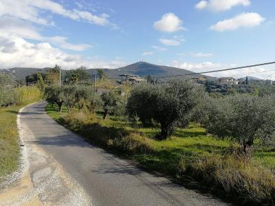 Terreno Agricolo in Vendita a Veroli