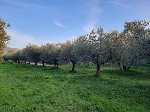 Terreno Agricolo in Vendita a Alatri