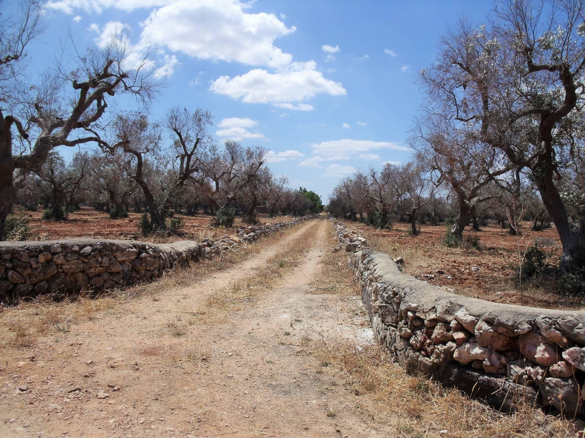Terreno Agricolo in vendita a Matino, 9999 locali, prezzo € 220.000 | Cambio Casa.it