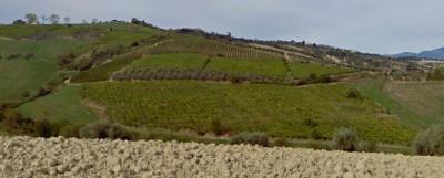 Terreno Agricolo in Vendita a Notaresco