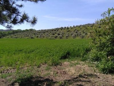 Terreno Agricolo in Vendita a Bellante