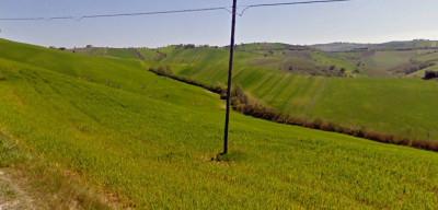 Terreno Agricolo in Vendita a Sant'Omero