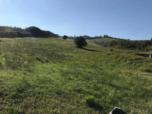 Terreno Agricolo in Vendita a Mosciano Sant'Angelo