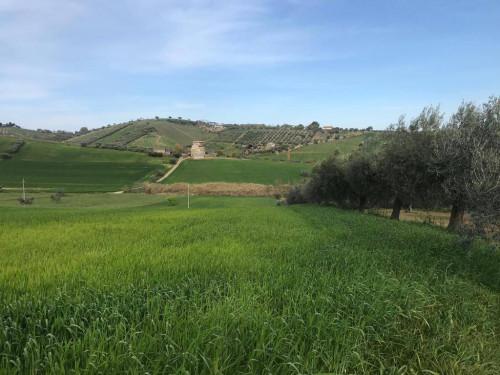 Terreno Agricolo in Vendita a Tortoreto
