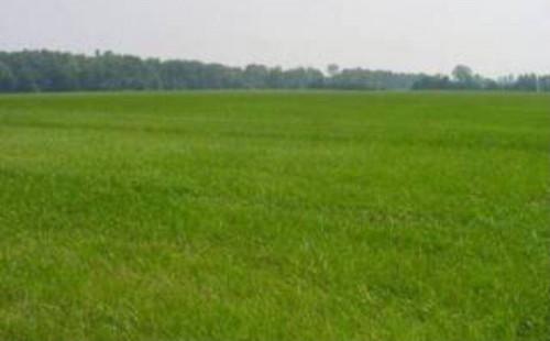 Terreno Agricolo in Vendita a Sommariva del Bosco