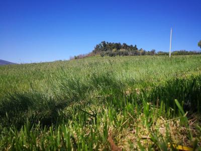Terreno Agricolo in Vendita a Folignano
