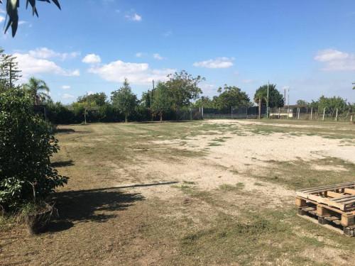 Terreno Agricolo in Affitto a Somma Vesuviana