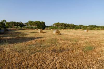 Terreno edificabile in Vendita a Massafra