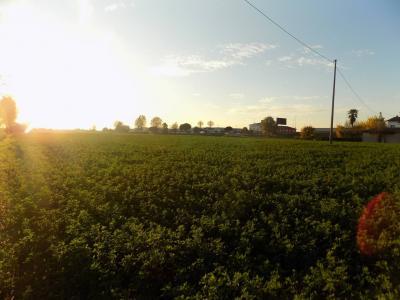 Terreno edificabile in Vendita a Gambellara