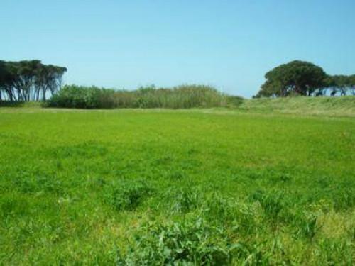 Terreno edificabile in Vendita a Orgiano