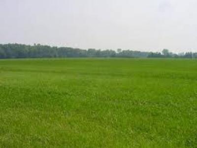 Terreno edificabile in Vendita a Conselice