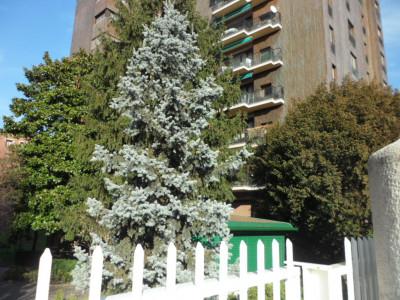 Vai alla scheda: Appartamento Affitto - Milano (MI)   Lorenteggio - Codice -42-320001