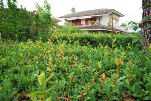 Vai alla scheda: Villa a schiera Affitto - Verona (VR)   Chievo - Codice -336-NS42