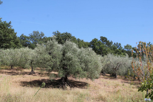 Terreno Agricolo in Vendita a San Giacomo degli Schiavoni