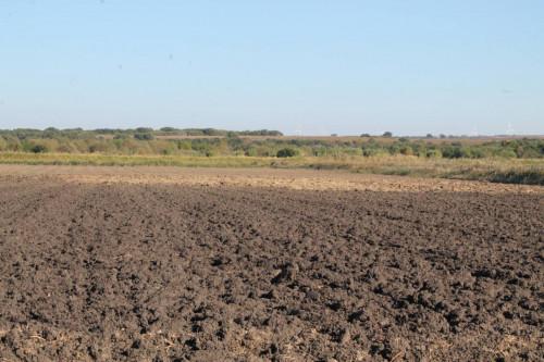 Terreno Agricolo in Vendita a Campomarino