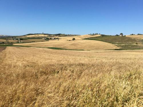 Terreno Agricolo in Vendita a San Martino in Pensilis