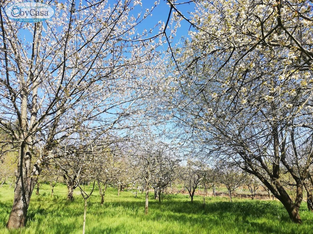 Terreno Agricolo in vendita a Bassano Romano, 9999 locali, zona Località: bassanoromano, prezzo € 88.000   CambioCasa.it