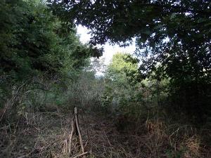 Terreno Agricolo in Vendita a Vejano