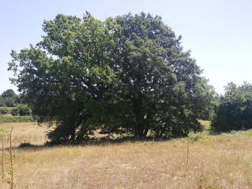 Terreno Agricolo in Vendita a Oriolo Romano