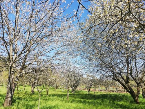 Terreno Agricolo in Vendita a Bassano Romano