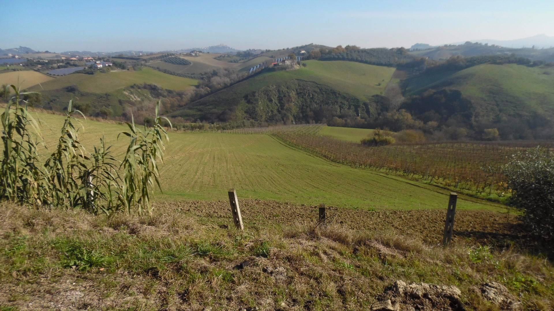 Terreno Agricolo in vendita a Monsampolo del Tronto, 9999 locali, zona ampolo, prezzo € 85.000   PortaleAgenzieImmobiliari.it