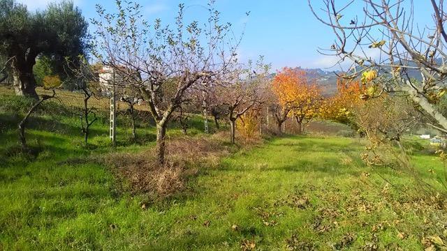Terreno Agricolo in vendita a Monteprandone, 9999 locali, zona obuchi, prezzo € 100.000 | PortaleAgenzieImmobiliari.it