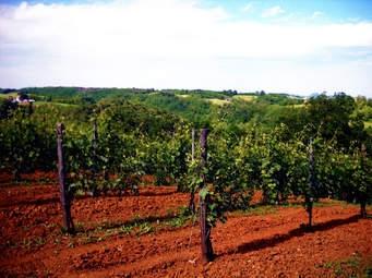 Terreno Agricolo in vendita a Conselice, 9999 locali, prezzo € 300.000   CambioCasa.it
