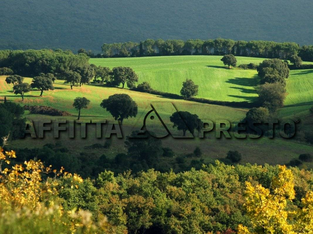 Attività / Licenza in affitto a Collesalvetti, 4 locali, prezzo € 2.300   PortaleAgenzieImmobiliari.it